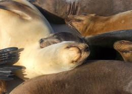 Galapagos snorkel & dive tours