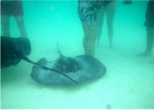 Stingray City - Antigua