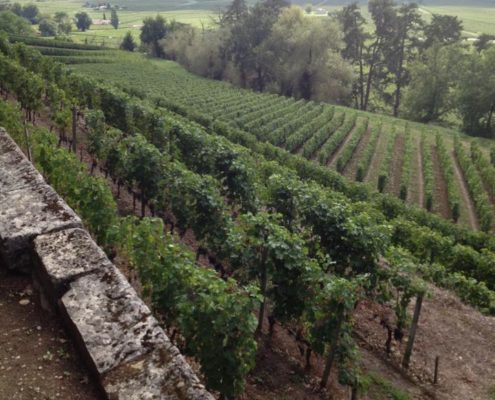 Plan a trip to Vineyard in France